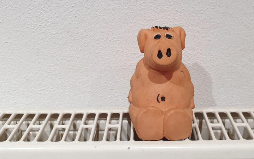 symbolbild schwein