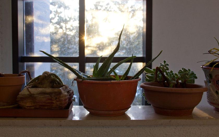 topfpflanzen vor einem fenster, durch das die sonne scheint