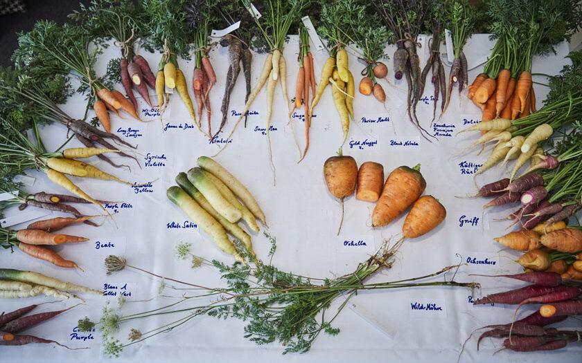 Karottenvielfalt ©Koch.Campus – Helge Kirchberger